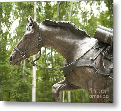 Metal Print featuring the photograph Sgt Reckless by Carol Lynn Coronios