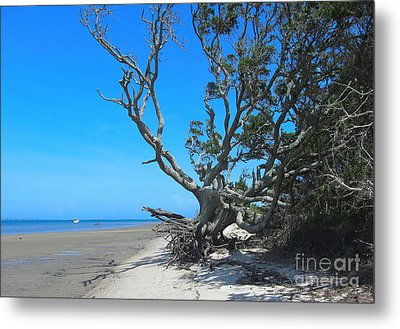 Shackleford Banks Tree 2 Metal Print