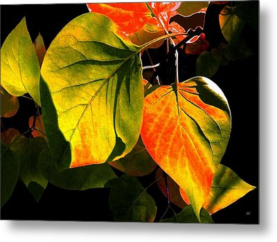 Shades And Shadows Metal Print by Will Borden