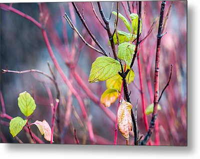 Shades Of Autumn - Reds And Greens Metal Print by Alexander Senin