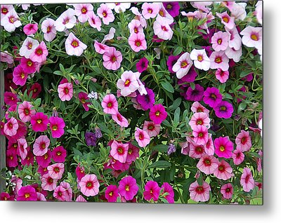 Shades Of Pink Metal Print by Aimee L Maher Photography and Art Visit ALMGallerydotcom