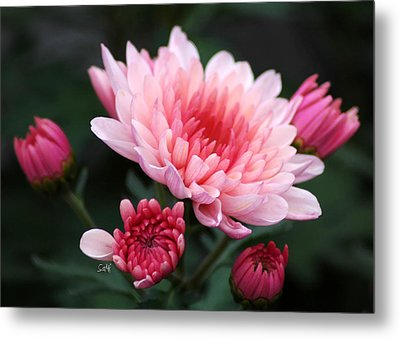 Metal Print featuring the photograph Shades Of Pink by Sami Martin
