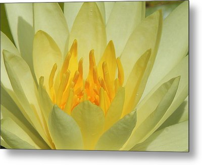 Shades Of Yellow Metal Print