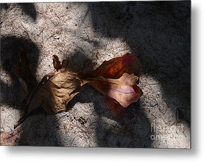 Metal Print featuring the photograph Shading by Michelle Meenawong