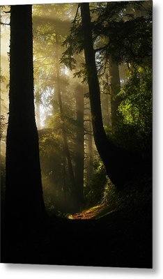Shadow Dreams Metal Print by Jeff Swan