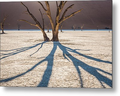 Shadow Of The Camel Thorn - Dead Vlei Photograph Metal Print