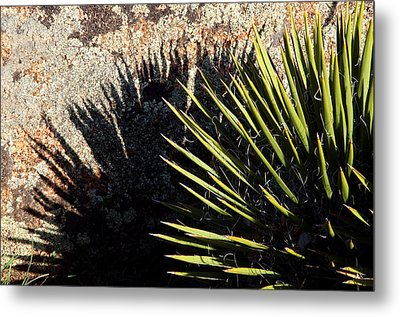 Shadow Of The Yucca Plant Metal Print