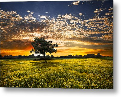 Shadows At Sunset Metal Print by Debra and Dave Vanderlaan