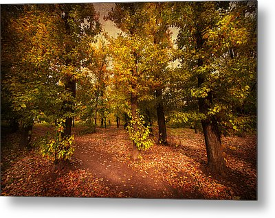 Shadows Of Forest Metal Print
