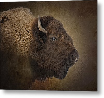 Shaggy One Metal Print
