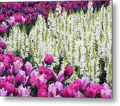 Metal Print featuring the photograph Shape Of Flowers by Yue Wang
