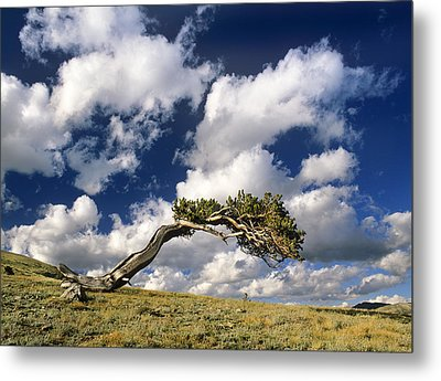 Shape Of The Wind Metal Print by Bijan Pirnia