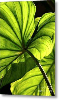 Shapes Of Hawaii 12 Metal Print by Ellen Cotton
