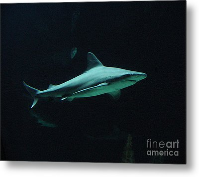 Shark-09451 Metal Print by Gary Gingrich Galleries