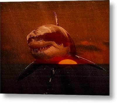 Metal Print featuring the photograph Shark In A Sunset by Randy Sylvia