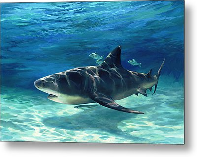 Shark In Depth Metal Print by Laurie Hein