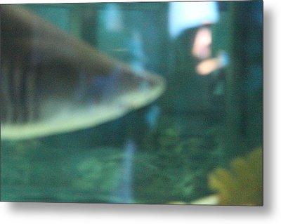 Shark - National Aquarium In Baltimore Md - 121210 Metal Print by DC Photographer