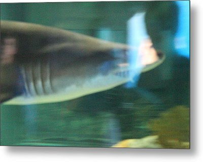 Shark - National Aquarium In Baltimore Md - 121211 Metal Print by DC Photographer