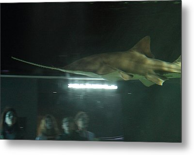 Shark - National Aquarium In Baltimore Md - 121212 Metal Print by DC Photographer