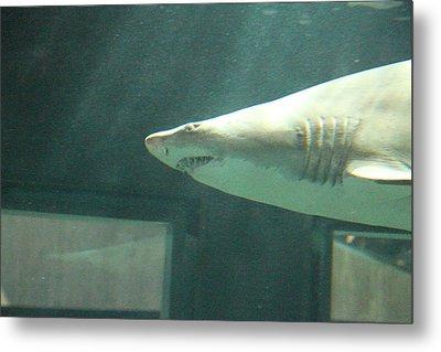 Shark - National Aquarium In Baltimore Md - 121219 Metal Print