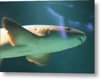 Shark - National Aquarium In Baltimore Md - 121224 Metal Print by DC Photographer