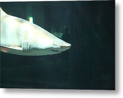 Shark - National Aquarium In Baltimore Md - 12125 Metal Print by DC Photographer