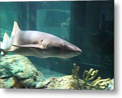 Shark - National Aquarium In Baltimore Md - 12129 Metal Print by DC Photographer
