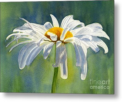 Shasta Daisy Blossom With Blue Background Metal Print