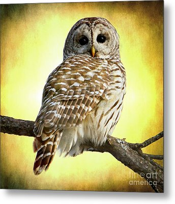 She Sees Right Into The Heart Of Me Metal Print by Heather King