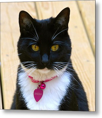Sheeba Metal Print