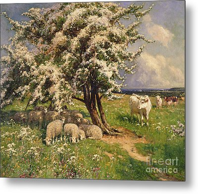 Sheep And Cattle In A Landscape Metal Print