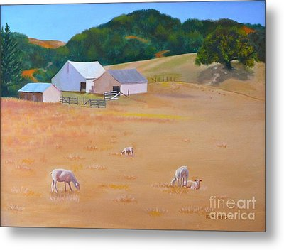 Sheep At Redhill Farm Metal Print by K L Kingston
