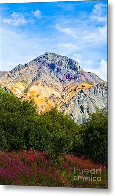 Sheep Mountain Alaska   Metal Print