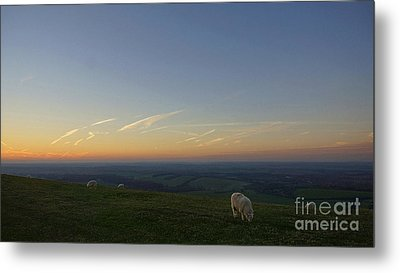 Sheep On The Gibbit Metal Print
