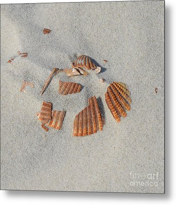Shell Jigsaw Metal Print by Meandering Photography