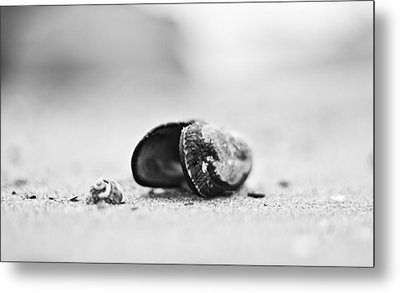 Shell On The Beach Metal Print by Andrew Raby