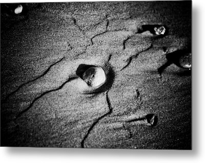 Shell On The Sand Black And White Photography Metal Print by Raimond Klavins