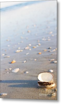 Metal Print featuring the photograph Shells 02 by Melissa Sherbon