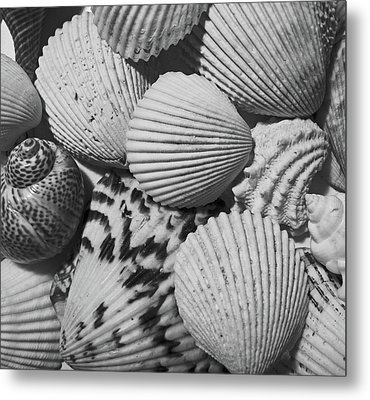 Shells In Black And White Metal Print by Mary Bedy