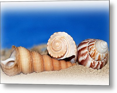 Shells In Sand Metal Print by Francie Davis