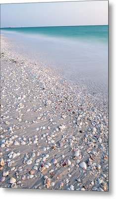 Shells In The Sand Metal Print by Adam Pender