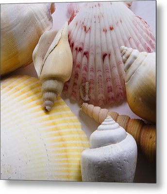 Metal Print featuring the photograph Shells by Kevin Bergen