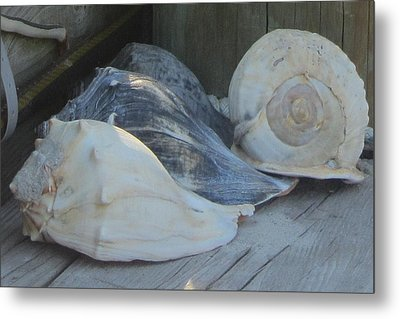 Shells Of Portsmouth Island Metal Print by Cathy Lindsey