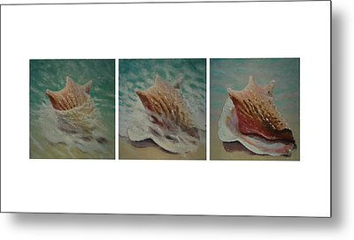 Shells Triptych Metal Print by Don Young