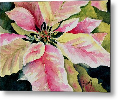 Shelly's Poinsettia Metal Print by Sam Sidders