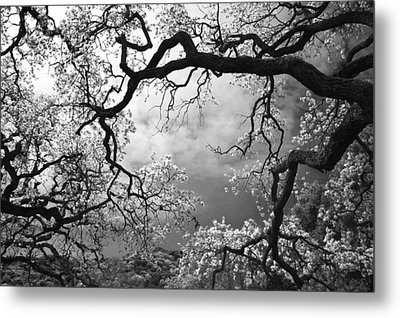 Sheltering Sky Metal Print by Laurie Search