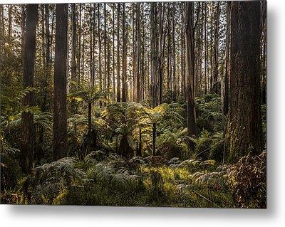 Sherbrooke Forest Metal Print by Shari Mattox