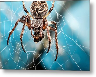 Spider's Web Metal Print