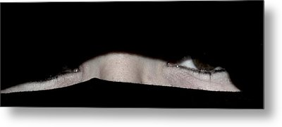 She's Peeking Metal Print by Michelle McPhillips