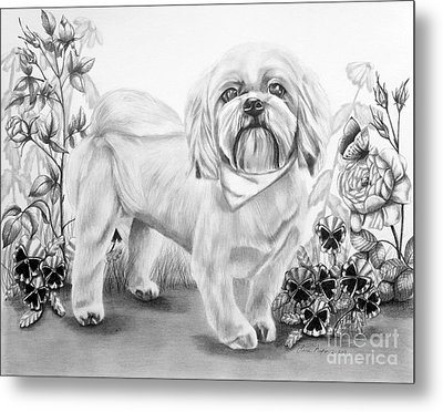 Shih Tzu In Black And White Metal Print by Lena Auxier